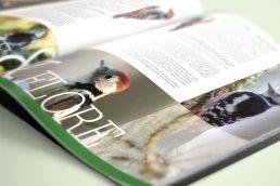 Thomas daems - realisations - edition - chalet robinson magasine (1)